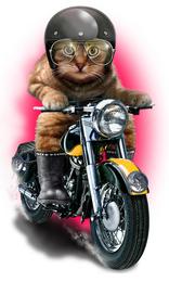 Дизайнерская футболка кот байкер